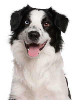 Yorkville Toronto Condominiums Pet Friendly Buildings & Pet Restrictions